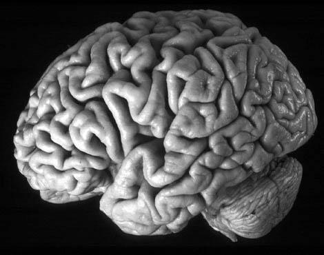 ein Gehirn