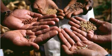 Eine Saatgut-Quelle jenseits der Monopole
